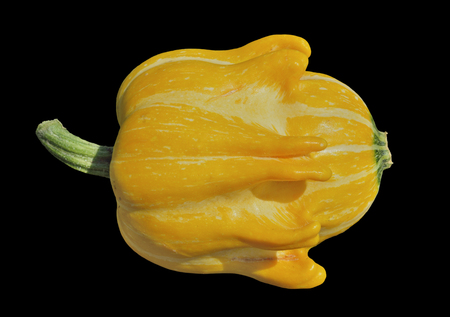 A close up of the yellow pumpkin. Isolate on black.