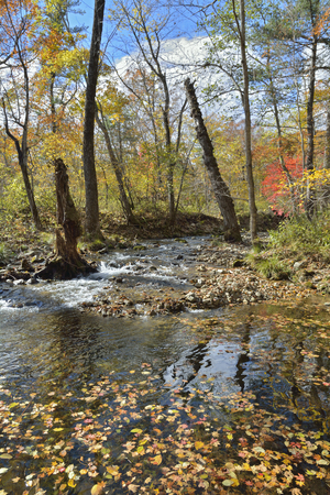 The autumn landscape on small woodsy river. 스톡 콘텐츠