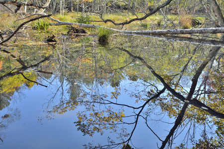 The landscape on very small lake in forest, autumn.