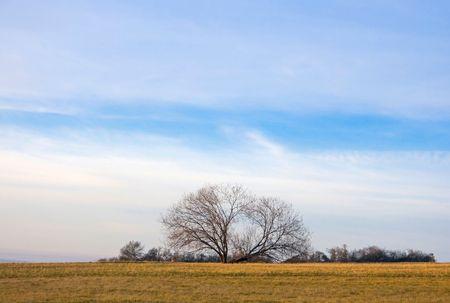 moorland: Moorland