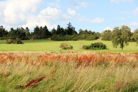 Wild Grass Stock Photo - 2428952