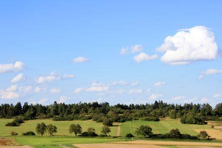 moorland: Moorland Forest Stock Photo
