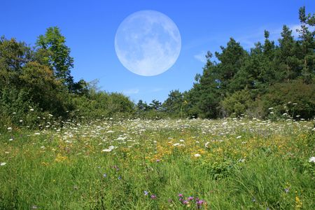 Meadow with Full Moon