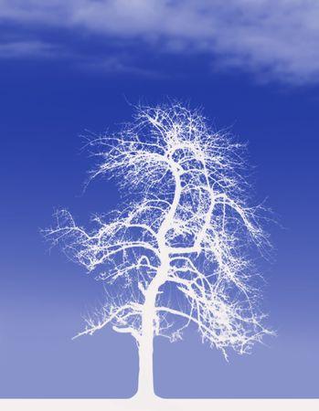 White Tree photo