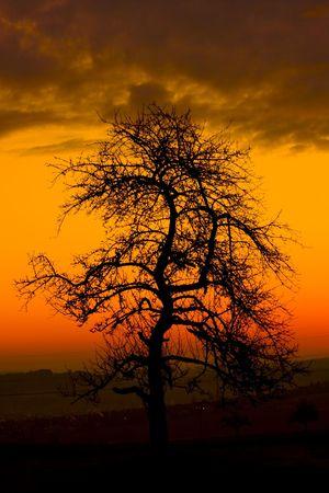 Tree at Morning photo