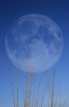 moonrise: Grass with Moon Stock Photo