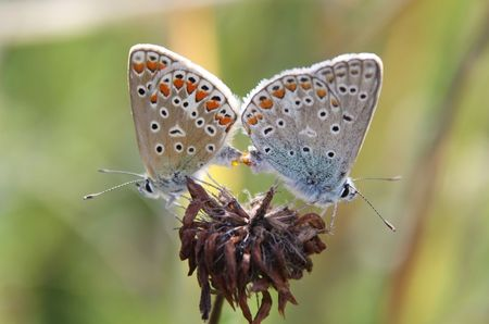 Butterfly  photo