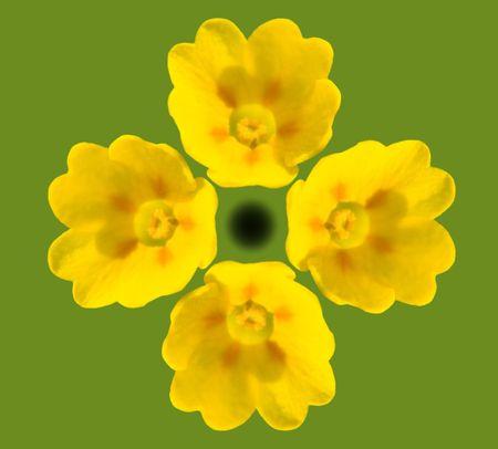 cowslip: Cowslip Blooms
