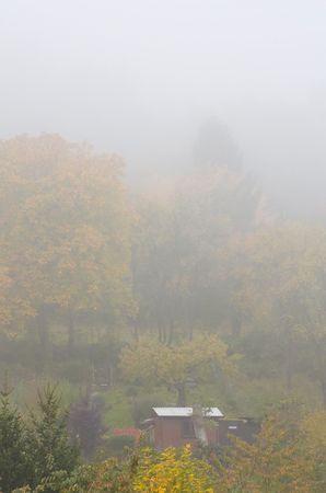 Fog in Autumn