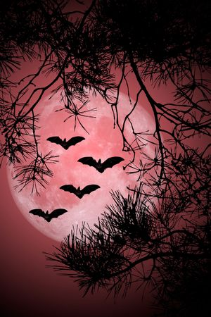 Noche de Halloween Foto de archivo - 3725611