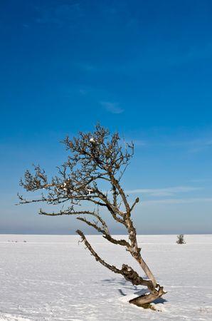 Death Tree Banco de Imagens