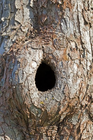 Trunk with Hole