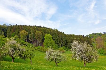 Trees in Spring Banco de Imagens