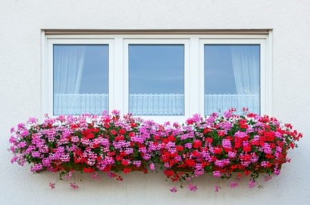 Flower Window with geranium Stock Photo
