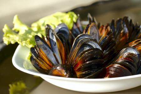 Empty steamed mussels photo