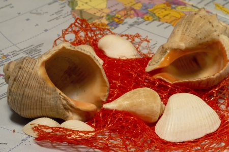 exotism: Several different shells and red network together