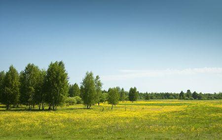 ablooming: Spring fields & allee in summer, wonderful intense colors