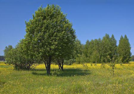 ablooming: Campi di primavera estate e vicolo