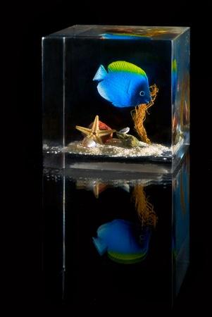 colour intensity: Underwater scene inside plastic cube over black background Stock Photo