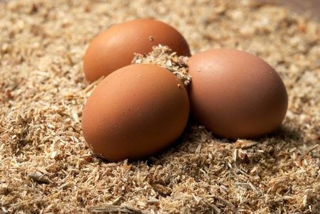 Three brown eggs laying on sawdust photo