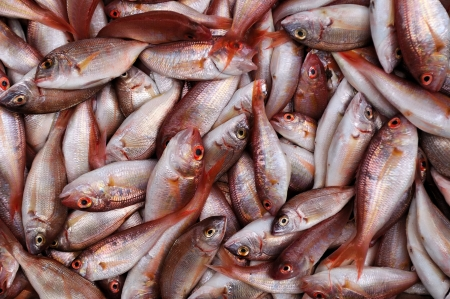 Fresh red sea bream fish background  Photographed in the Israeli market Stock Photo - 13804616