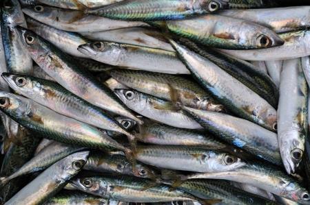 atun rojo: El at�n fresco de pescado de fondo rojo Fotografiado en el mercado israel�
