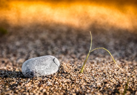 Sprouting plant and small stone on the beach sand  Very small depth of field Stock Photo - 17686953