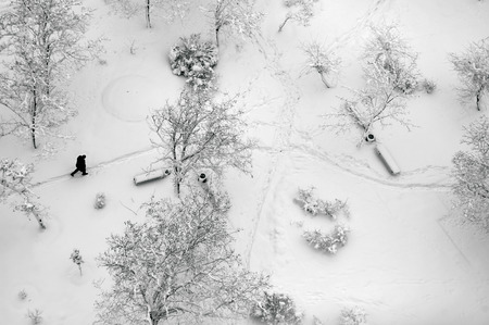 Aerial top view on a winter park with trees and footpath covered with snow. Lonely man walking through