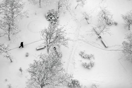Vista superior aérea de un parque de invierno con árboles y sendero cubierto de nieve. Hombre solo que recorre a través de Foto de archivo - 36429278