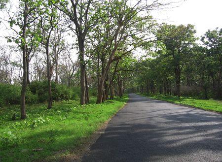 Natures Way Stock Photo - 333991