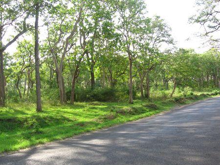 Nature Stock Photo - 333992