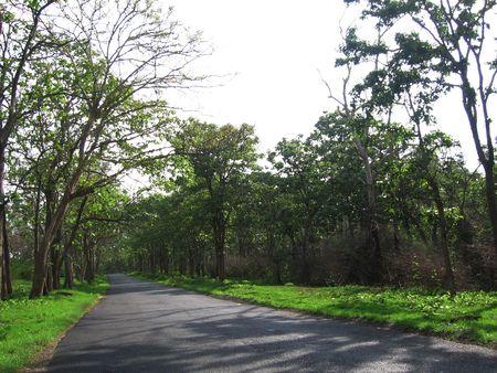 Natures Way Stock Photo - 333993