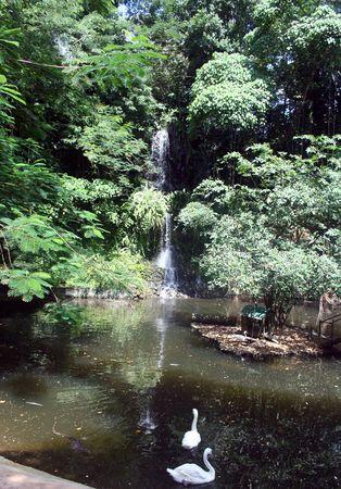 Waterfall with swan photo