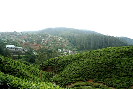 Tea plantations in Sri Lanka Stock Photo