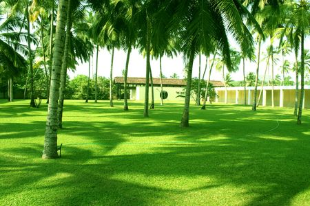 Green Grass and coconuts Stock Photo - 813006