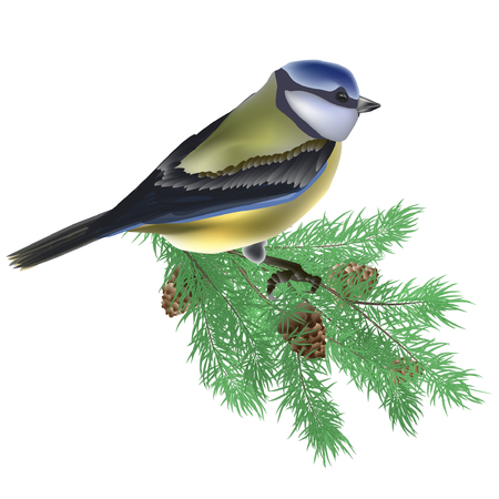 Vector realistic composition with Tomtit bird on conifer branches isolated on white background.