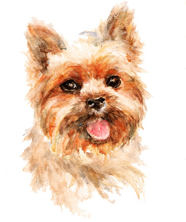 Watercolor artistic dog portrait isolated on white background. Cute pet animal head hand drawn.Yorkshire terrier.