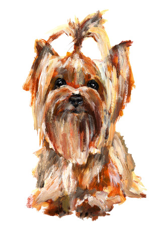 Yorkshire Terrier painted with acrylic paints on a white background Stock Photo