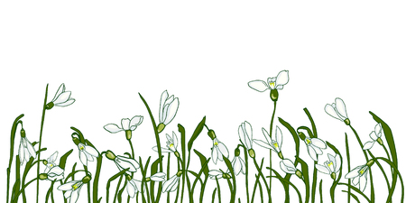 Fresh snowdrops on a white background with space for text. Card with the first spring flowers. Vector illustration of graphic snowdrops.