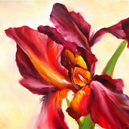 Iris claret on a white background - oil painting on canvas. Botanical illustration.