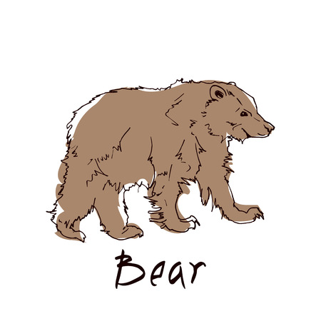 Brown bear side view close-up on white background. Wild animal stands on four paws. Vector illustration of terrestrial predaceous mammal banner.