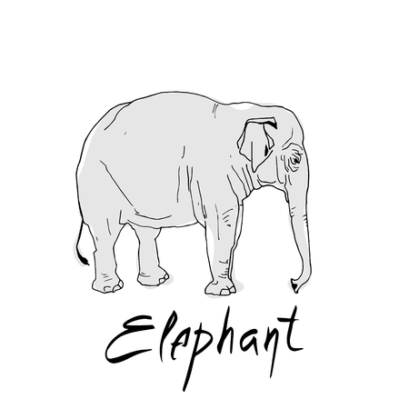 Elephant in a cartoon style, is insulated on white background. African animal wildlife vector illustration icon. Иллюстрация