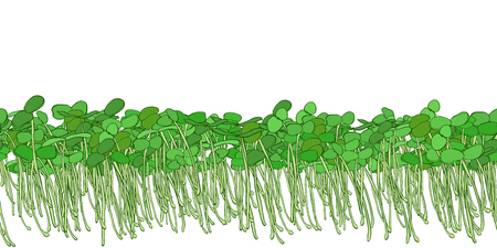 Seamless pattern of young shoots microgreen. Fresh young sprouts . Microgreen healthy food. Vegetarian food.  Raw sprouts, microgreens, healthy eating concept Vector illustration Stock Vector - 119049172