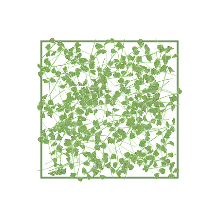 Group of young sprouts seedlings pattern on a white background. Raw sprouts, microgreens, healthy eating concept. Vector illustration