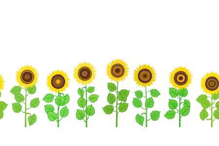 Seamless horizontal pattern of plants sunflower on white.  Summer seamless pattern with sunflower. Summer harvest. Design for textile, fabric,  packaging, wallpaper. Ilustração