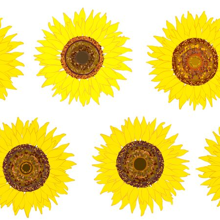Seamless pattern of sunflower on white.  Summer seamless pattern with sunflower. Summer harvest. Design for textile, fabric,  packaging, wallpaper. Vettoriali