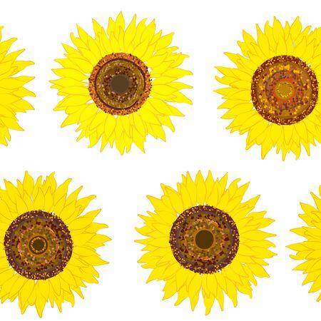 Seamless pattern of sunflower on white.  Summer seamless pattern with sunflower. Summer harvest. Design for textile, fabric,  packaging, wallpaper. Иллюстрация