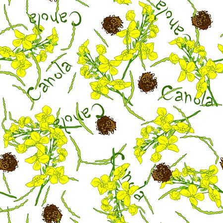 Summer seamless pattern with flowers, plant canola. Sprig with leaves, buds, flowers. Design for printing, wrapping, wallpaper, textiles. Vector illustration on white background.