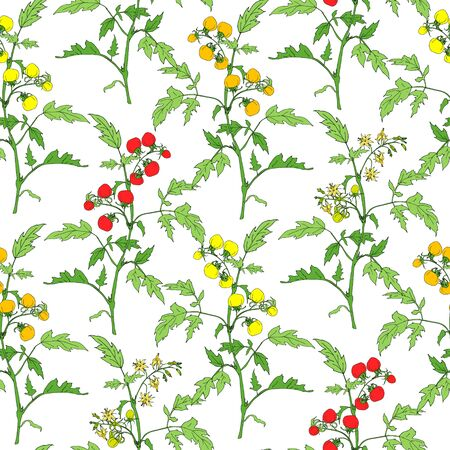 Seamless pattern of sketches with  tomatoes branch isolated on white background. Ideal for the design of fabrics, packaging materials, organic farm products. Vector
