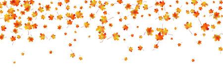 Horizontal pattern bright dried maple autumn foliage isolated on white. Graphic design autumn symbol. Red orange yellow autumn leaves with shadow. Autumn foliage seasonal background. Vector
